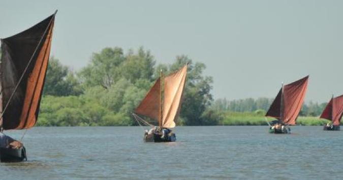 Verschillende zalmschouwen varen in een rivier met groene natuur op de achtergrond